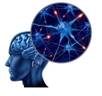 brainnerveblue2