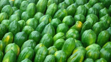 greengreenpapaya