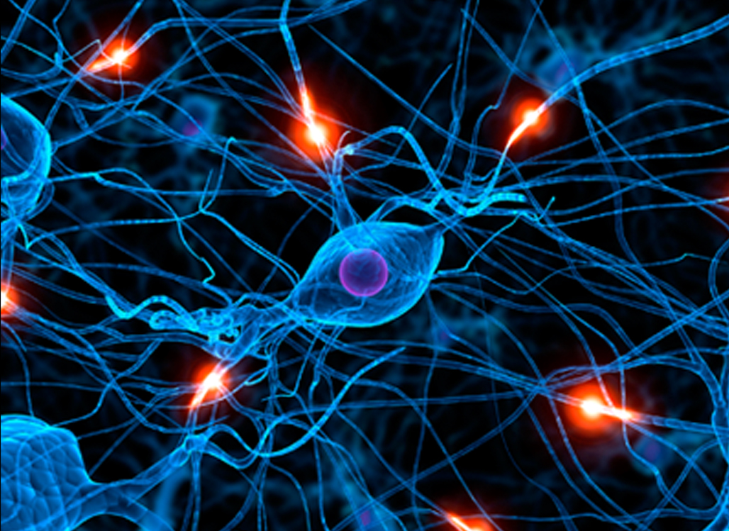 2 Ten Facts About Teen Mindfulness And Neuroplasticity The Md