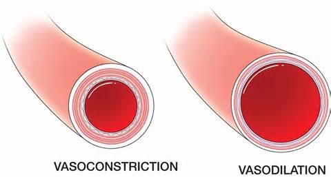 vasodilation_1