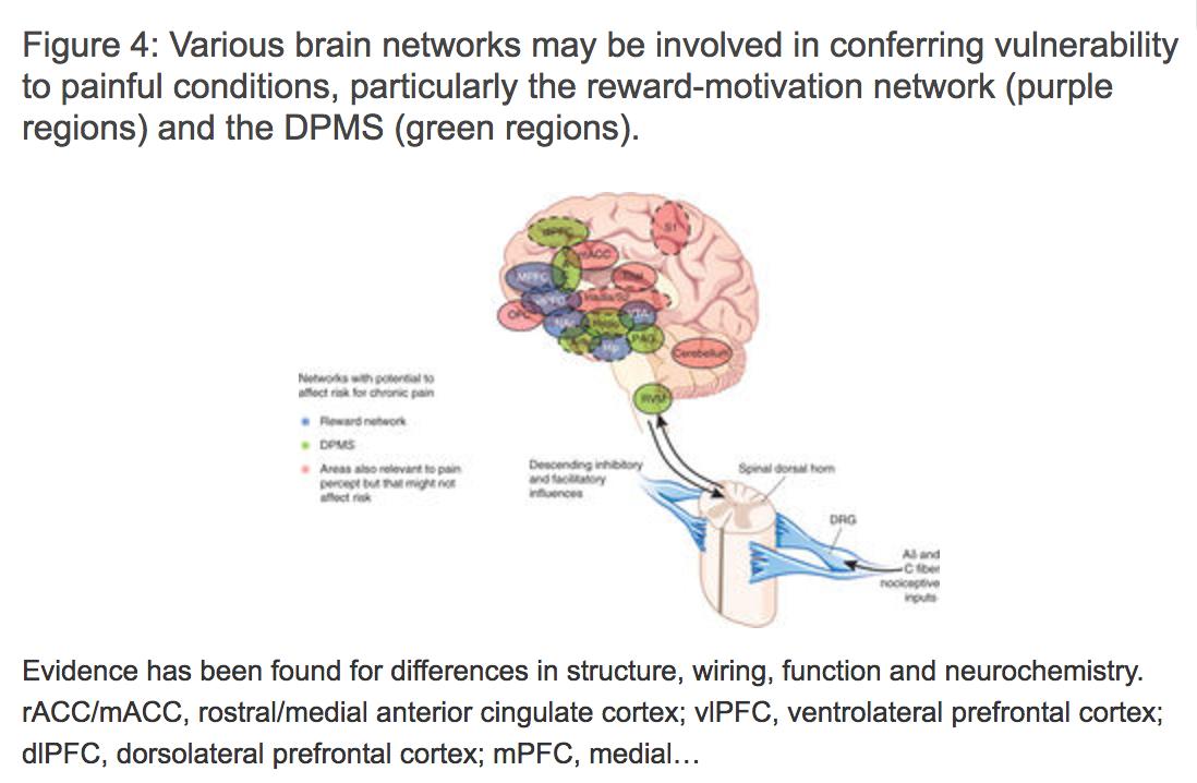 CRPS exhibits brain vulnerability in reward center, motivation/learning & descending modulation.